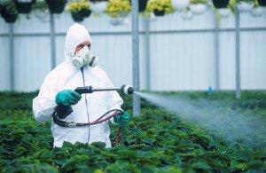 Особенности работы с пестицидами