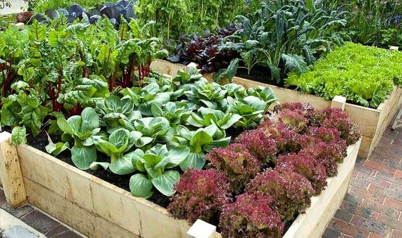 Совместимость растений и типы взаимодействия