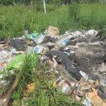 Экологи Зеленого фронта на страже защиты природы Брянщины