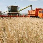 Ульяновские аграрии начали уборку урожая ранних технических культур