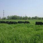 Представители Сахалинского Минсельхоза провели встречу с аграриями Курильского района