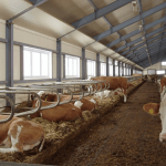 Государство поддерживает развитие животноводства в Севастополе