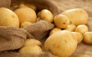 Картофель: урожайные сорта, характеристика, способы посадки, уход.