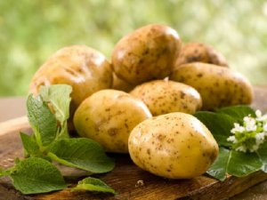 Самый лучший сорт картошки: посадка и уход
