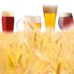 Ярославских фермеров учат выращивать пивоваренный ячмень