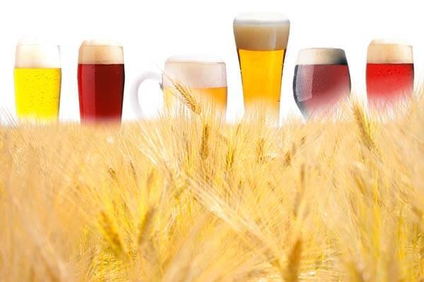 В Ярославской области проводят эксперимент по выращиванию 10 соротов пиваренного ячменя