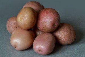 Семенной картофель Романо