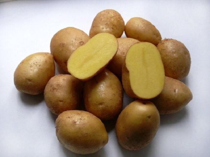 Картофель сорта тимо