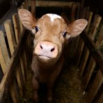 Животноводы из Белгородской области побывали с дружеским визитом в Нидерландах