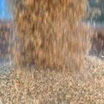 В агроиндустриальном парке Тюменской области создается зерновой хаб