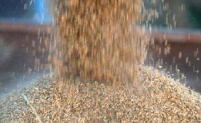 Деятельность Тюменского агроиндустриального парка ограничат переработкой и хранением зерна