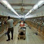 Израиль намерен внедрять свои технологии в сельское хозяйство России