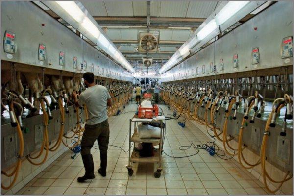 Израильские технологии станут внедряться в российское животноводство