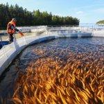В Карелии через восемь лет годовой объем производства рыбной продукции будет составлять 35 тыс. т.