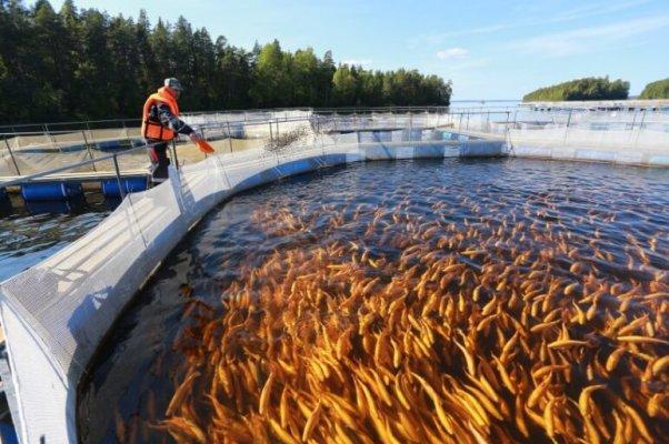 В КАрелии развивают рыбохозяйственную отрасль