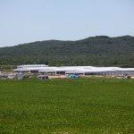 На территории ТОР «Михайловский» вьетнамский инвестор планирует построить большой животноводческий комплекс