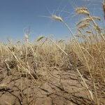 Страховые компании, работающие в области сельского хозяйства, надеются получить государственные субсидии