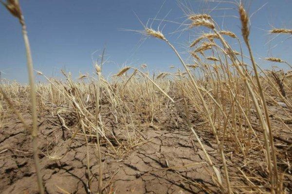 Союз агростарховщиков предлагает правительтсву пересмотреть выделение финансов регионам пострадавшим от ЧС