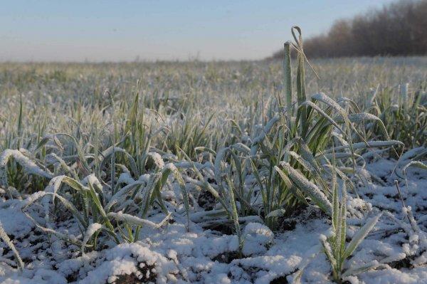 челябинские фермеры получат компенсацию за потерянные посевы