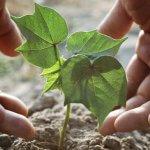 Красноярские ученые создали искусственный почвенный слой помогающий восстановлению земель