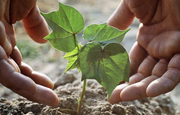 Красноярские ученые изобрели биомат для выращивания деревьев