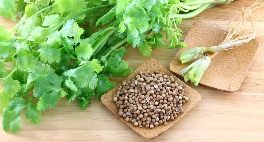 Зелень кориандра, семена
