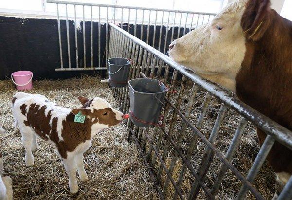В Иркутской области растет число семейных ферм