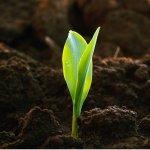 Студентка Курского государственного университета нашла способ очистки загрязненных земель