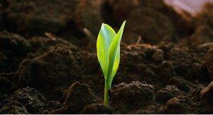 В КГУ нашли способ очистки земель, загрязненных нитратами