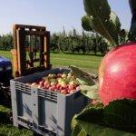 Власть Кубани берет направление на развитие садоводства