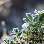 В Астрахани несвоевременные заморозки могут погубить урожай овощей