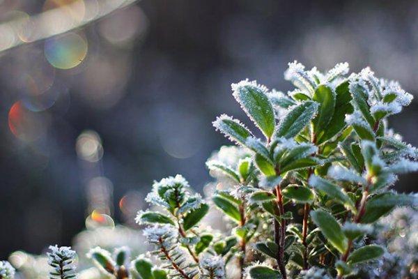 В Астраханской области первые заморозки придут на месяц раньше