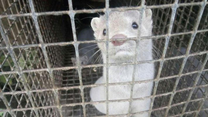 В Пряжинском зверосовхозе от голода гибнут животные