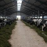 В Амурской области введена  в строй еще одна молочно-товарная ферма