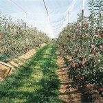 В Калининградской области взяли направление на развитие промышленного садоводства