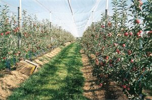 В Калиниградской области развивают промышленное садоводство
