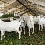 В Республике Марий Эл активно развивают молочное животноводство