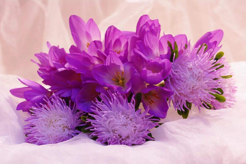 Колхикум пурпурный и махровый