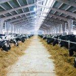 В Пензенской области планируется строительство крупной молочно-товарной фермы и центра логистики