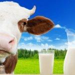 Государство снижает субсидирование молочной отрасли