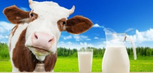 С убсидирование молочной отрасли сокращается