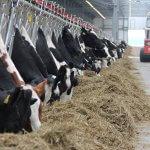 В Ульяновской области появится еще одно животноводческое хозяйство молочного направления
