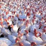 Крупный птицеводческий комплекс введен в строй в Тюменской области