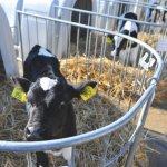 В республике Коми взяли направление на развитие мясного животноводства