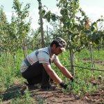 В Новгородской области развивают интенсивное садоводство