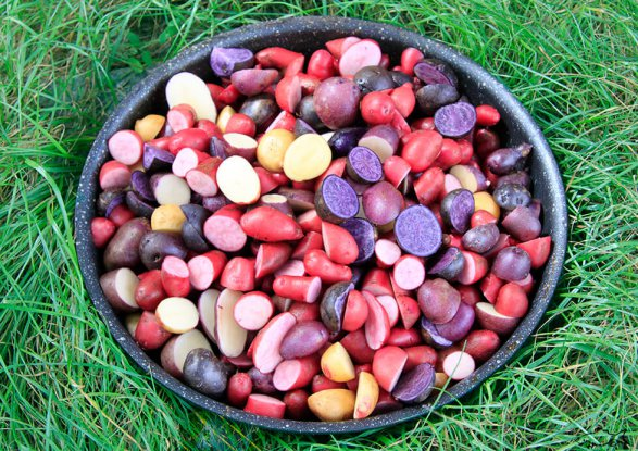 Цветная картошка спаест от рака