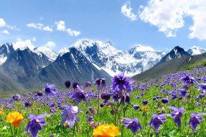 Алтайские лекарственные растения вызвали интерес у европейцев