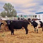 Гранты молодым фермерам в Иркутской области могут увеличить до 3 миллионов рублей