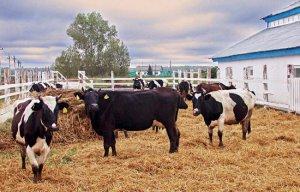 Молодым фермерам в Иркутской области увеличивают сумму грантов