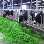 Приморский фермер разработал уникальный проект по утилизации биоотходов с пользой для хозяйства